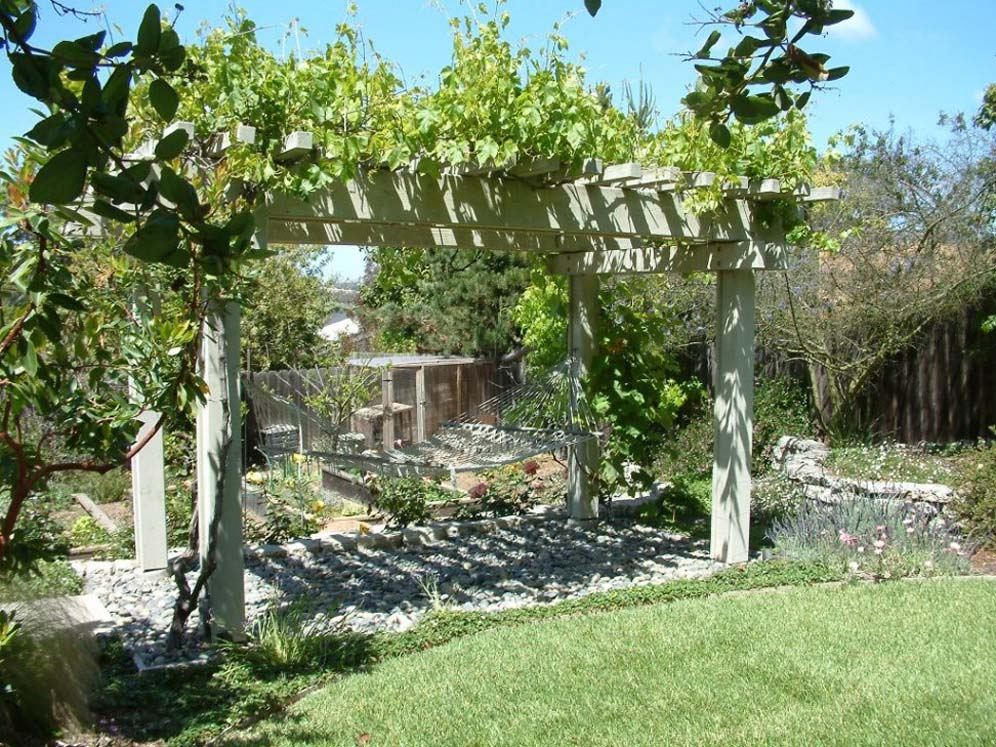 Arbor And Rogers Red Grape Vine